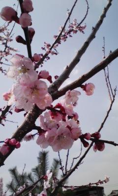 春…卒園式フリマ